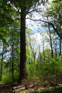 Alley Pond Park tree