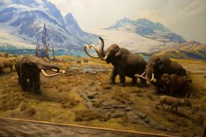 photo of Mammoth diorama, American Museum of Natural History