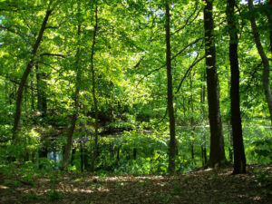 photo of trees and kettle pond in Alley Pond Park