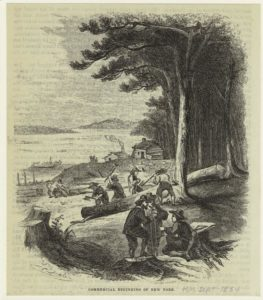 Historical print of commercial logging in colonial New York