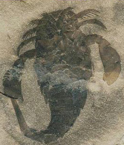 photo of fossil Eurypterus remipes