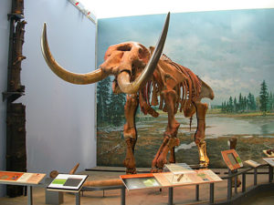 photo of Hyde Park Mastodon skeleton