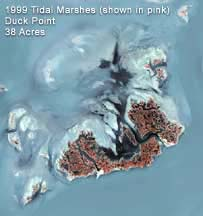 map of Duck Point Marsh, 1999