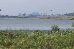 photo of Manhattan skyline viewed from Jamaica Bay National Wildlife Refuge