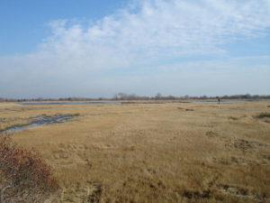 photo of winter wetland, Long Island