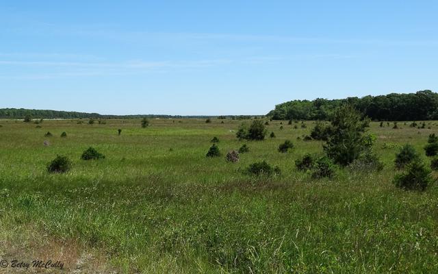 Photo of Calverton Grassland