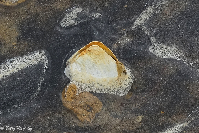 photo of clamshell