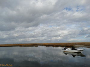 photo of salt marsh in winter