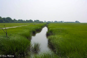 photo of salt marsh in summer