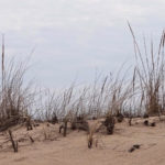 photo of beach grass